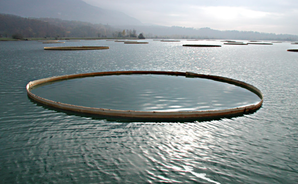 Mireille Fulpius, Water Lilies, 58 spruce rings, 10-12m diam, floating on water (Rhône), 2003